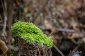 Baumstumpf-Polster