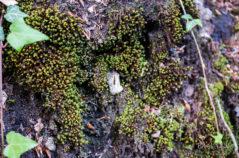 Grüne Mini-Knöllchen