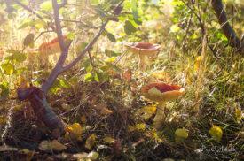 Pilze im Sonnenschein