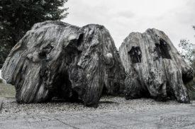Verkieselte Baumstümpfe