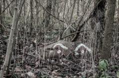 LaLeLu, nur der Wald schaut zu....äähh WAS?!